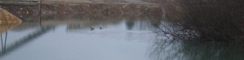 Karpfenangeln am Baggersee