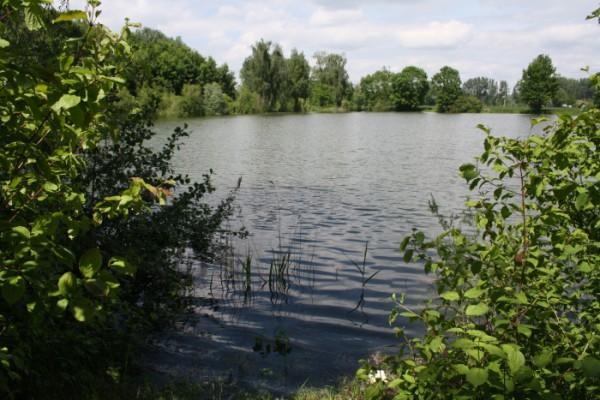 Angelsee in Forellenteiche in Niedersachsen